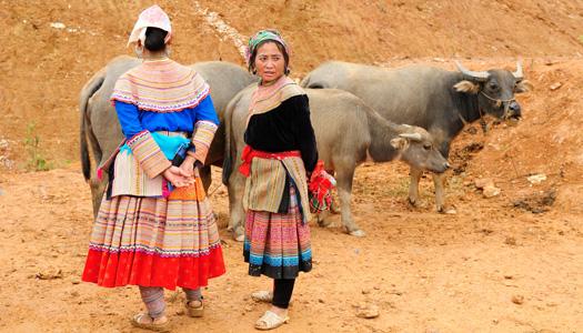 Hmong fleurs à Bac Ha
