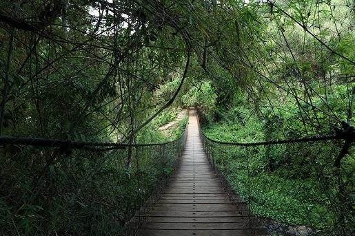 jungle-ratanakiri